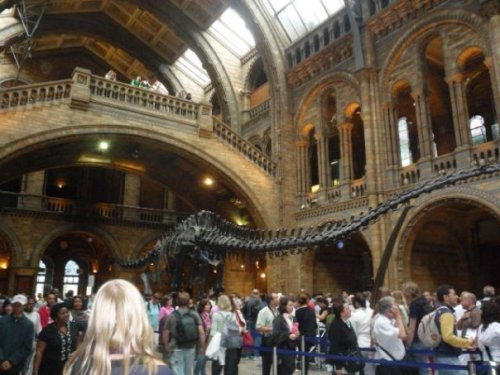Natural History Museum (the main hall)